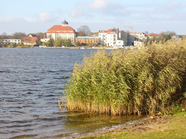 Schilf beim Tiefer See (Reeds by the Tiefer See)