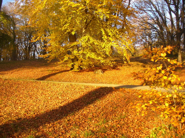 Park Babelsberg - Goldener Herbst (Golden Autumn)