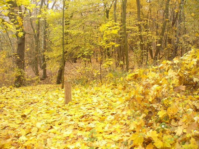 Kladow - Herbstgold (Autumn Gold)