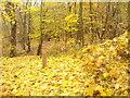 UUU7211 : Kladow - Herbstgold (Autumn Gold) von Colin Smith