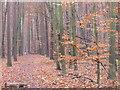 UUU7809 : Zehlendorf - Wald Beim Koenigsweg (Woodland Beside Koenigsweg) von Colin Smith