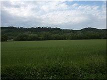 Feld bei den Hirschauer Baggerseen
