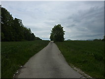 Weg durch die Felder beim Scheuerlesbach östlich von Ohmenhausen