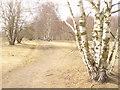 UUU8707 : Marienfelde - Feldweg (Country Path) von Colin Smith