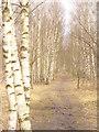 UUU8507 : Waldweg beim Mauerweg (Woodland Path by the Berlin Wall Way) von Colin Smith