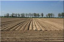 Kartoffelfeld bei Immerath