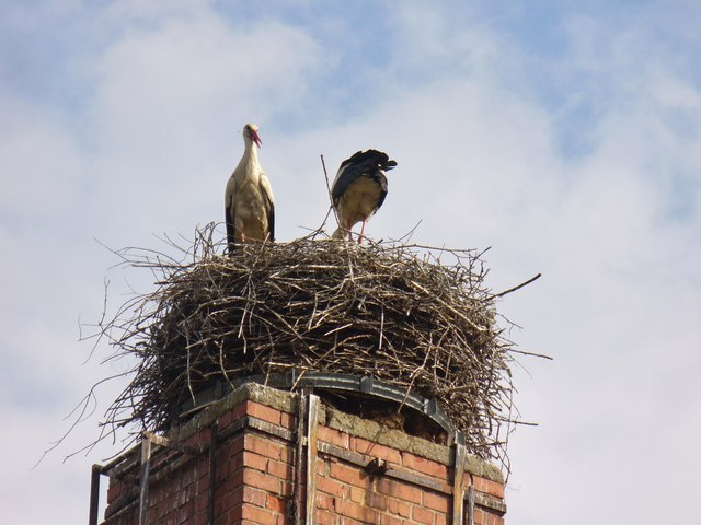 Gross Machnow - Ein Paar Storchen (Two Storks)