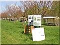 UUU8408 : Teltow - 12. Japanische Kirschbluetenfest (12th Japanese Cherry Blossom Festival) von Colin Smith