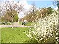 UUU8506 : Teltow - Suedspitze der Kirschbluetenallee (Southern End of Cherry Blossom Avenue) von Colin Smith