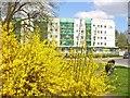 UUU8207 : Teltow - Fruehling in der Stadt (Springtime in Town) von Colin Smith