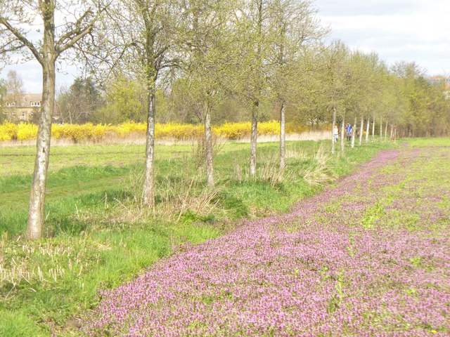 Teltow - Wiesen am Hollandweg (Meadows on Hollandweg)