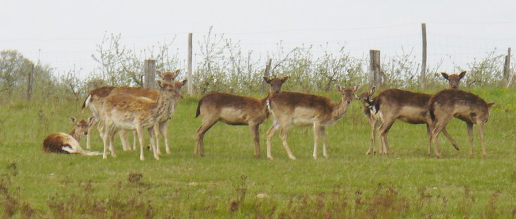 Marquardt - Wildgehege (Deer Enclosure)