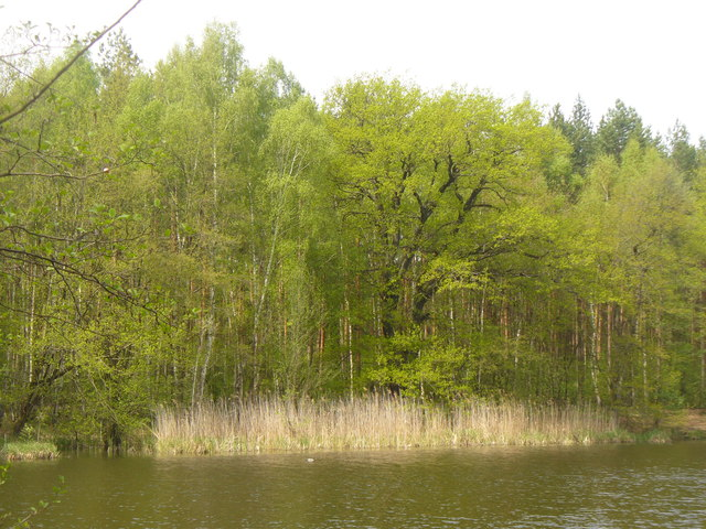 Selchower See - Laubwald (Selchow Lake - Deciduous Wood)
