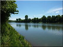 Der Neckar bei Aldingen