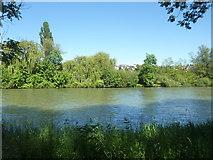 Der Neckar bei Hochberg