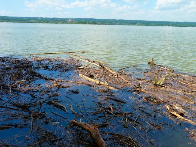 Treibholz im Ammersee (Floating timber debris)