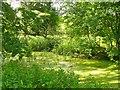 UUU7328 : Eiskeller - Ehemaliger Kanal (Former Canal) von Colin Smith