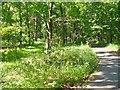 UUU7426 : Spandauer Forst - Berliner Mauerweg (Spandau Forest - Berlin Wall Way) von Colin Smith