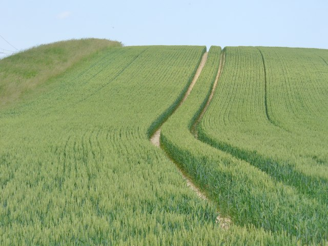 Uckermark - Weizenfeld (Wheat Field)
