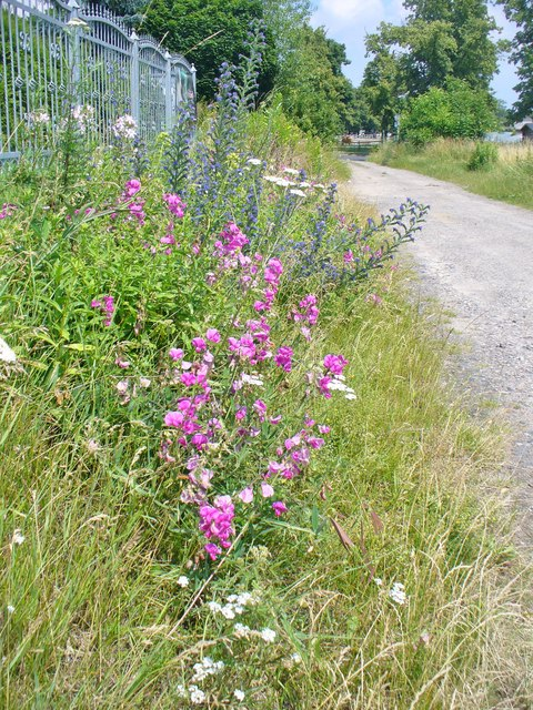 Grossziethen - Blumen am Mahlower Weg (Flowers on Mahlower Weg)