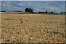 Felder bei Scherpenseel