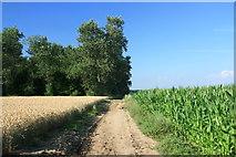 Feldweg an der Teverener Heide