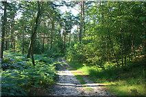 Waldweg in der Teverener Heide