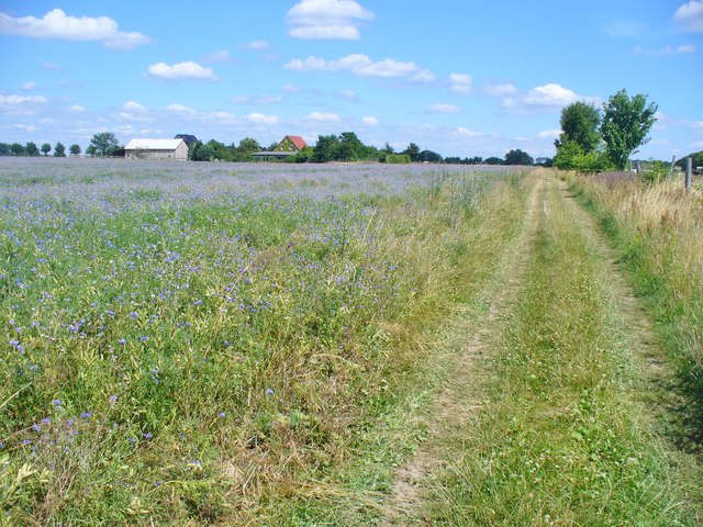 Kindelwald - Feldweg (Field Path)