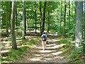 UUU8534 : Bieselheide - Waldweg (Woodland Path) von Colin Smith
