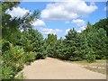 UUU8535 : Bieselheide - Ehemalige Grenzstreife (Former Border Strip) von Colin Smith