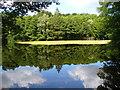 UUU8535 : Hubertussee - Frohnau von Colin Smith