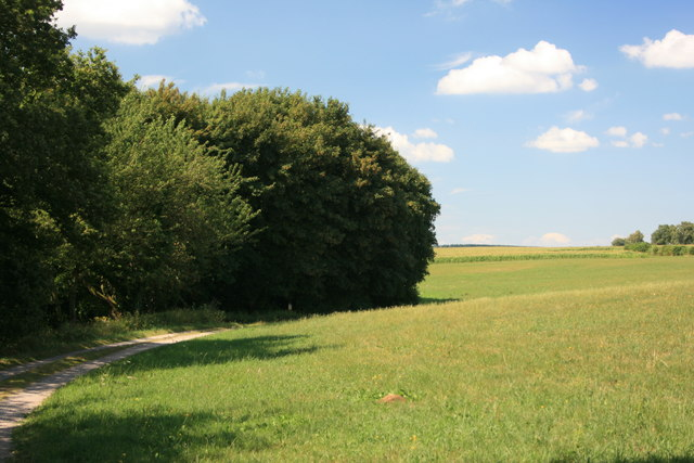 Wiese am Waldrand