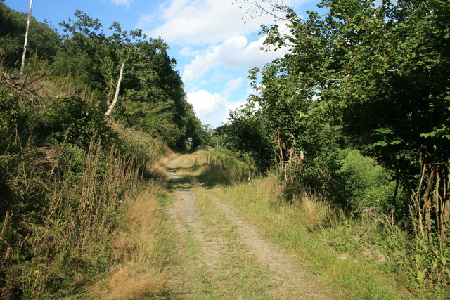 Waldweg im Nationalpark