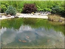 Bad Pyrmont - Zen Garten