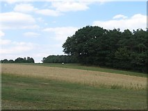 Rinteln Volksen - Landschaft