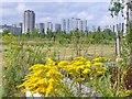 UUU9508 : Berlin - Gropiusstadtblick (Prospect of Gropius City) von Colin Smith