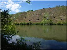 Der Neckar beim Max-Eyth-See