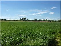 Felder bei Neckargröningen