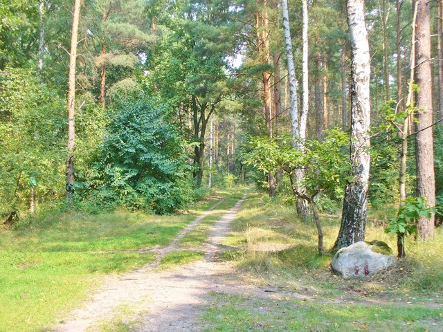 Forst Grunewald - Waldwegkreuzung (Grunewald Forest - Woodland Path Junction)