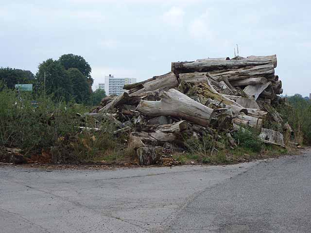 Logpile at Buschbell