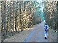 UUU7828 : Papenberge - Uferpromenade (Lakeside Walk) von Colin Smith