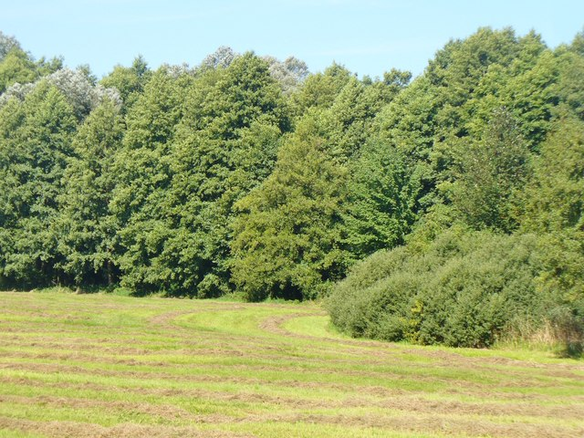 Wandlitz - Wald und Wiese (Wood and Meadow)