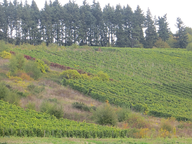Vineyard near Monzel