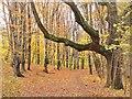 UUU9026 : Volkspark Schönholzer Heide - Waldweg (Schoenholz Heath Park - Woodland Walk) von Colin Smith