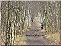 UUU7419 : Hahneberg - Waldweg (Woodland Path) von Colin Smith