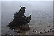 UMU4183 : Gespenstisch Wurzeln am Strand, Mummelsee by Mike Pennington