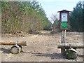 UUU8032 : Stolpe-Sued - Waldweg (South Stolpe - Woodland Path) von Colin Smith
