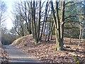 UUU7728 : Spandauer Forst - Berliner Mauerweg von Colin Smith