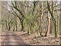 UUU7519 : Staaken - Grenzweg (Boundary Lane) von Colin Smith