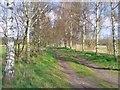 UUU7518 : Wilhelmstadt - Birkenallee (Birch Avenue) von Colin Smith